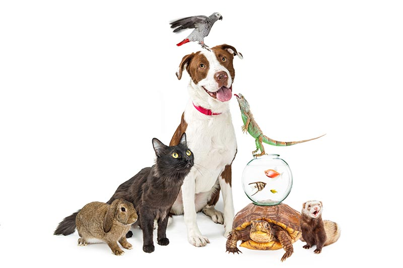 Dog, Cat, Turtle, and Fish