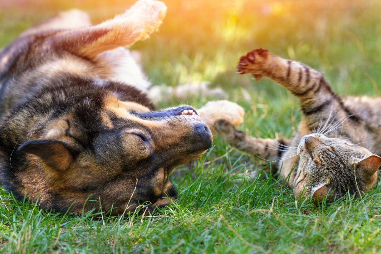 A cat and a dog rolling in the grass
